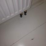 witte hoten vloeren